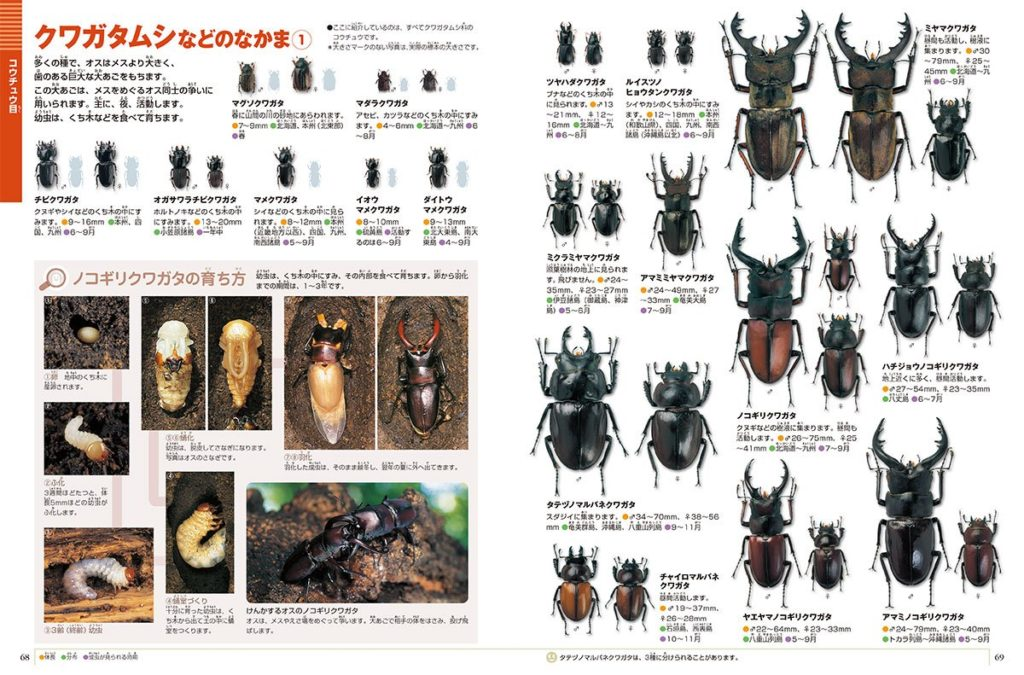 小学館の図鑑NEOの昆虫のカブトムシページ