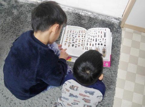 パジャマで図鑑を読む兄弟