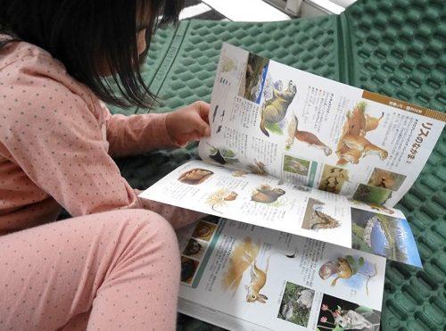 小学館の図鑑ネオの「動物」を熱心に読んでいる5歳の女の子