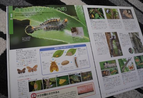 小学館の図鑑NEOの危険生物の毛虫のページ