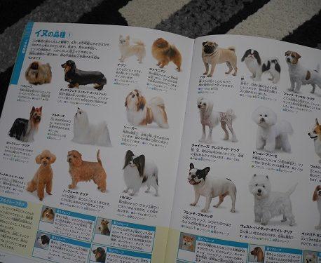 小学館の図鑑ネオの動物の犬のページ
