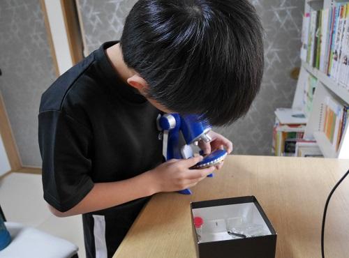 顕微鏡をのぞく小学3年生の男の子