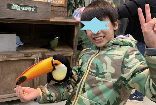 動物園でサイチョウを手にのせている小学生男の子