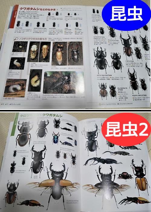 小学館の「昆虫図鑑」と「昆虫2」クワガタ・カブトムシ解説ページの違い