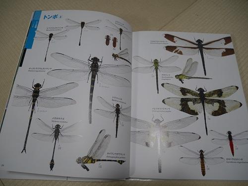 小学館図鑑neoの『昆虫2』のトンボ解説ページ