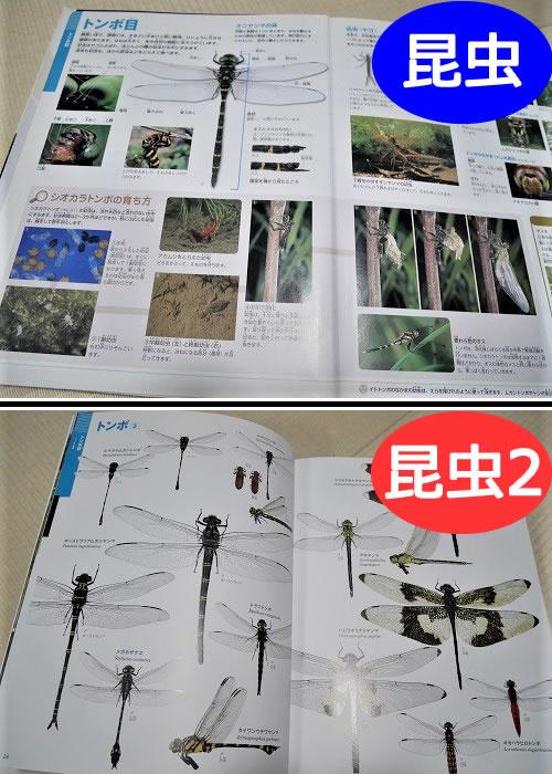 小学館の「昆虫図鑑」と「昆虫2」トンボの解説ページの違い