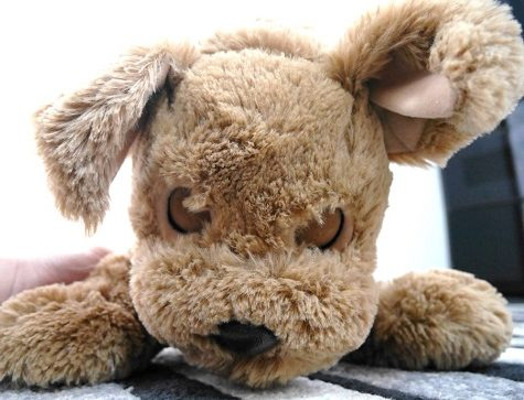 おはなしぬいぐるみ犬ダッキーの目を閉じた顔