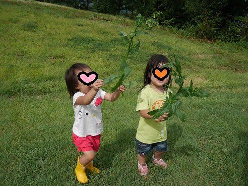 キャンプ場で草を集める2歳の女の子
